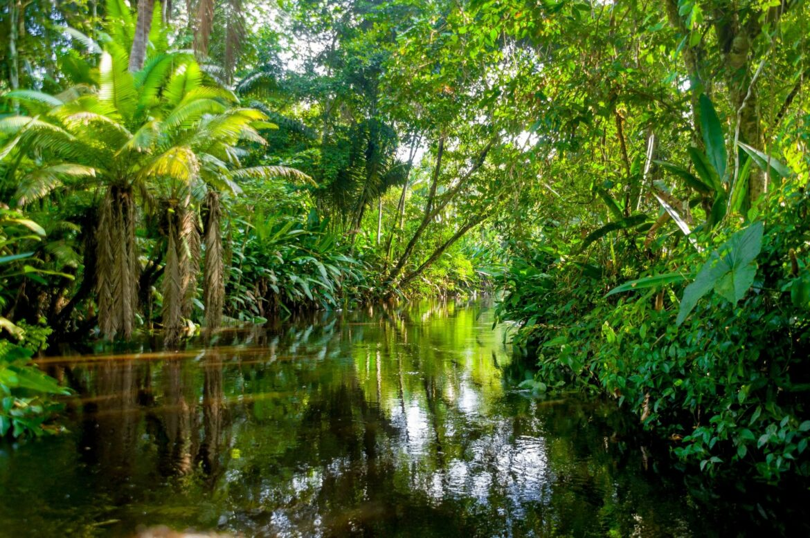 Scientists have confirmed Amazon rainforest is now emitting more carbon dioxide!
